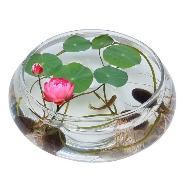 Water Culture Flowers Aquatic Bowl Lotus Hydroponics Wish Lotus Flower Seeds Lily Plants Lily Seeds