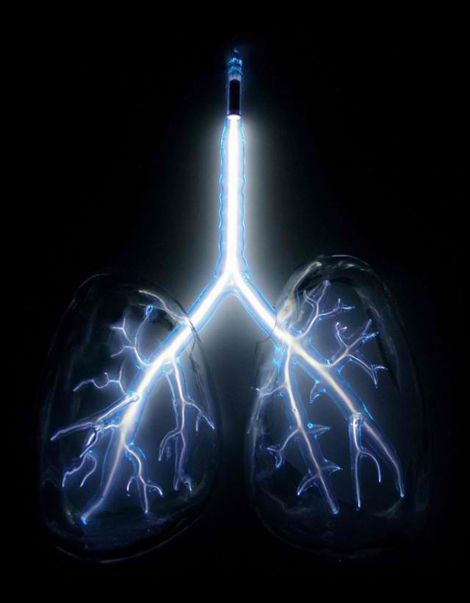 Lungs: On the external surgace of each lung is a serous membrane, the pleura (visceral).