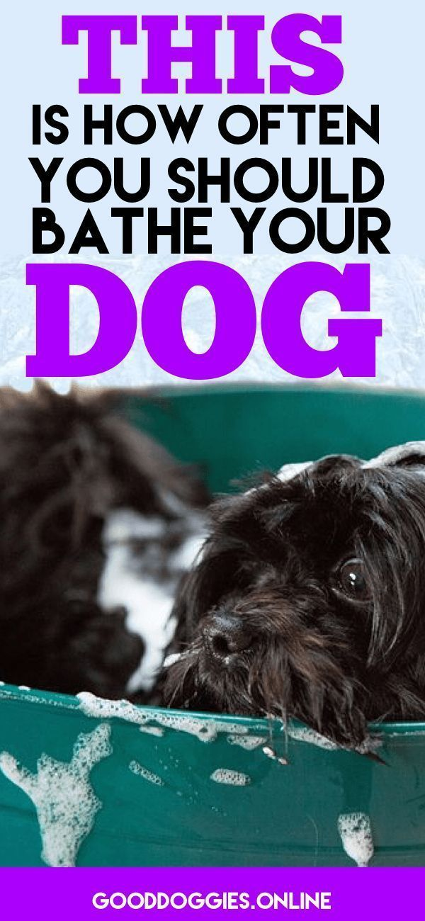 If your dog is stinky, you might be wondering how often to bathe a dog. Check out these dog grooming tips. #dogs #grooming #bath
