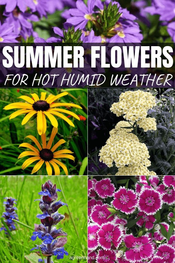 Summer Flowering Plants For Hot Humid Weather Summer Flowers To