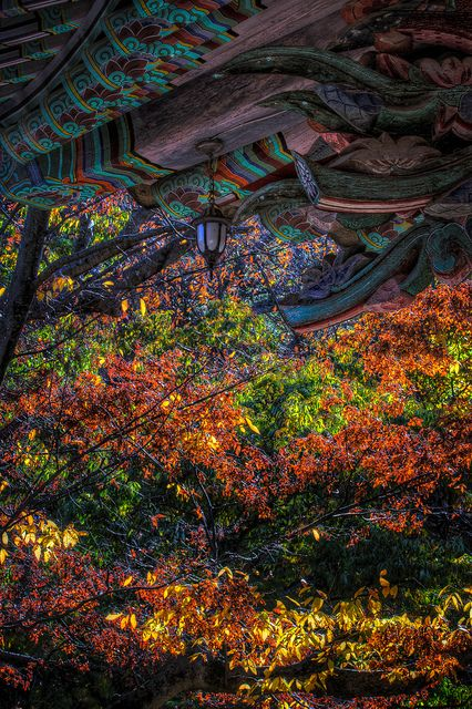 Autumn in Tongdosa ('Salvation of the world through mastery of truth'), Yangsan, Gyeongsangnamdo