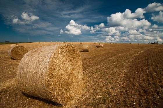 Hay under the sky by gen_dax