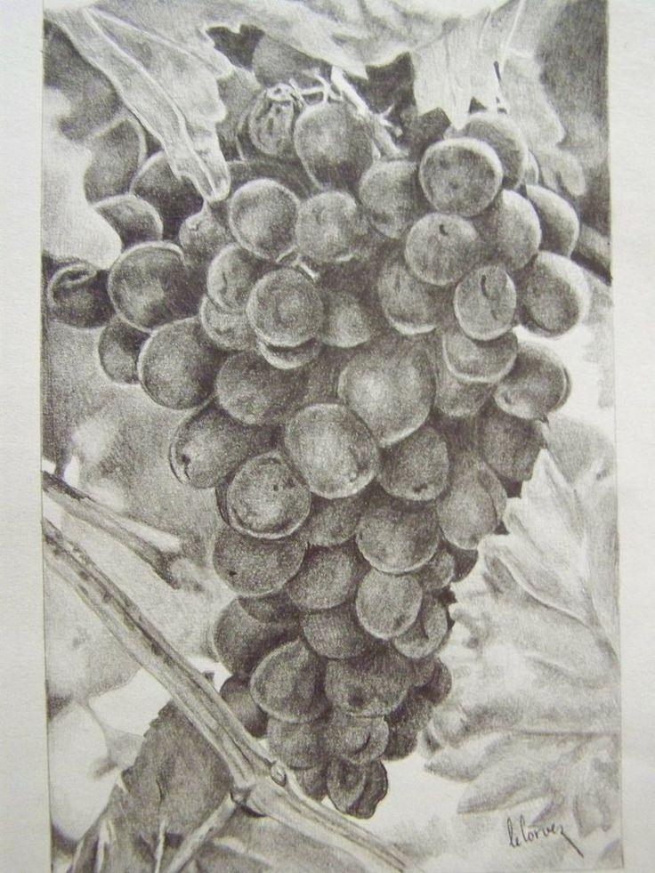 grape drawing - Google ძებნა