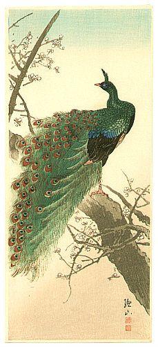 Sozan Ito 1884-? - Peacock