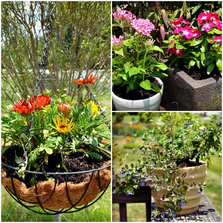 Lowes Garden Center Plants. I Stopped By Loweu0027s Yesterday For Some  Potting Soil And Was