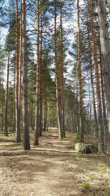 #Forest #Imatra