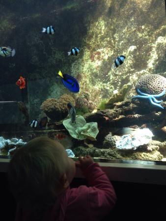 Photo of Reefworld Aquarium and Shark Swim