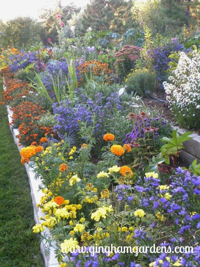 Flower Gardening Ideas 3 Sisters In 3 Gardening Zones Gingham
