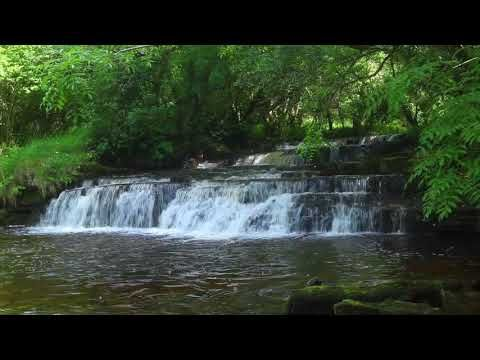 Relaxing Forest Waterfall Nature Sounds Birds Singing-Soothing