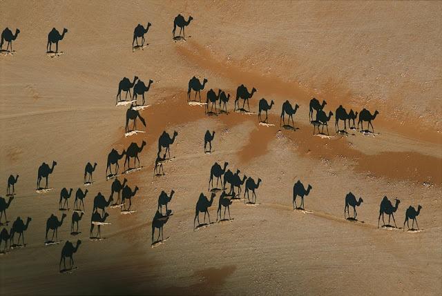 Sombras de camellos en el desierto de Rub al-Jali  Lo que ve no son camellos. Son sus sombras proyectadas sobre el desierto de Rub al-Jali (Arabia Saudí) y vistas desde el aire.   Rub al-Jali es uno de los mayores desiertos de arena del mundo. Su nombre significa en árabe cuarto vacío.   Su clima extremo (no es raro alcanzar los 55 grados en verano) hace que esté casi deshabitado.