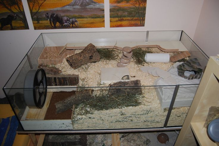 Hamstergehege damals und heute - was hat sich bei euch verändert? - Seite 2 - Haltung - www.das-hamsterforum.de