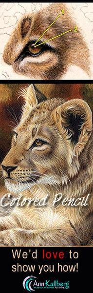 Why are cats the number one attraction on youtube? Because everyone loves them! Learn how to draw everyone's favorite in colored pencil. Instant download or print versions available.