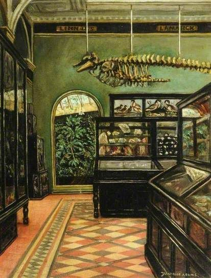 View of the Science Gallery at Weston Park Museum, Sheffield by Beatrice Adams
