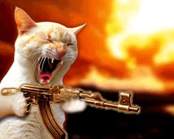 Funny Cat With Gun!