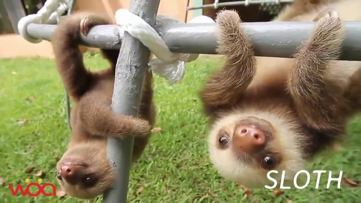 Lindo bebé animales en la vida silvestre
