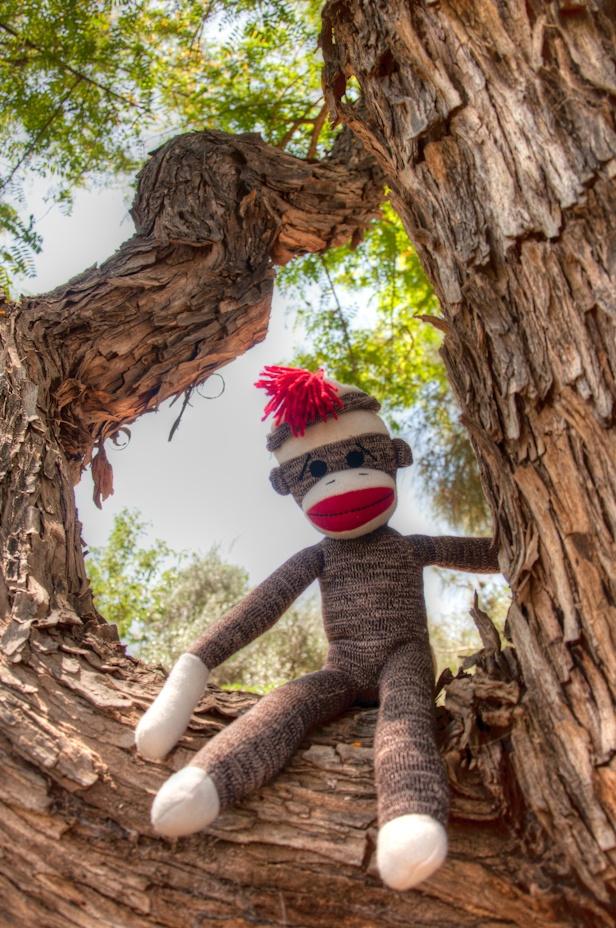The adventures of Captain Jack Sock! | Sock Monkey | Pinterest