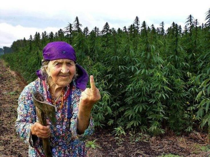 #WTF, #Retro, #Geek, #Humour, #StreetArt, #FunFacts, #Design, #Photographie, #SelectionDeLaSemaine - Paysane Roumaine et sa culture de weed #Gypsy #Romania