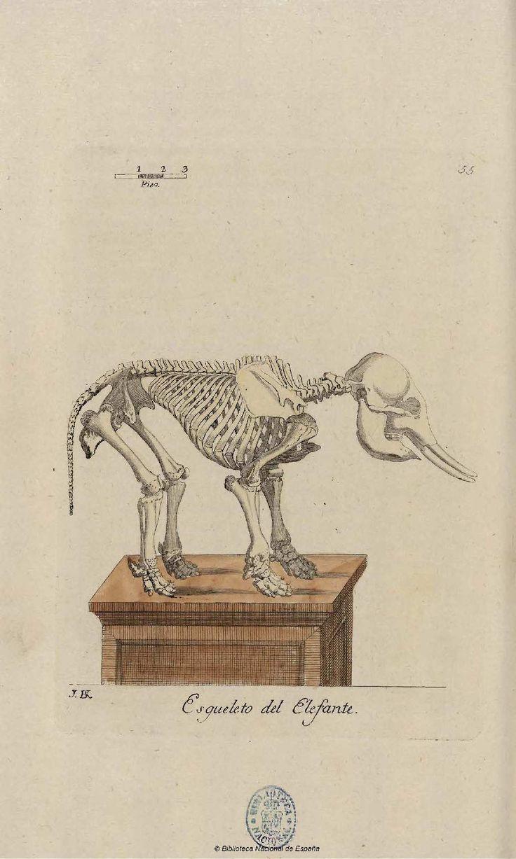 Esqueleto del elefante - Coleccion de laminas que representan los animales y monstruos del Real Gabinete de Historia Natural de Madrid, con una descripcion individual de cada uno. Bru de Ramón, Juan Bautista — Libro — 1784-1786
