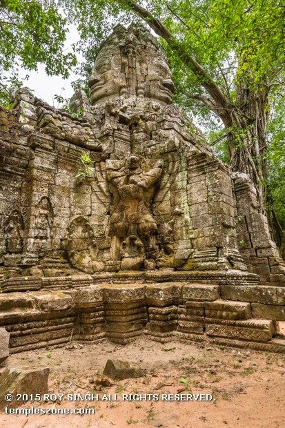 """The so-called 'Tomb Raider Temple"""", Ta Prohm with its crumbling towers and walls locked in the slow muscular embrace of vast root systems. it has been swallowed by the jungle, and looks very much the way most of the monuments of Angkor appeared when European explorers first stumbled upon them."""