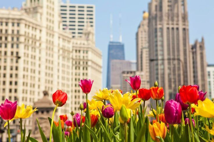 Swing into Spring: A Guide to Chicago's Upcoming Events