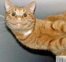 Забавные эмоции прикольных котов (23 фото) .