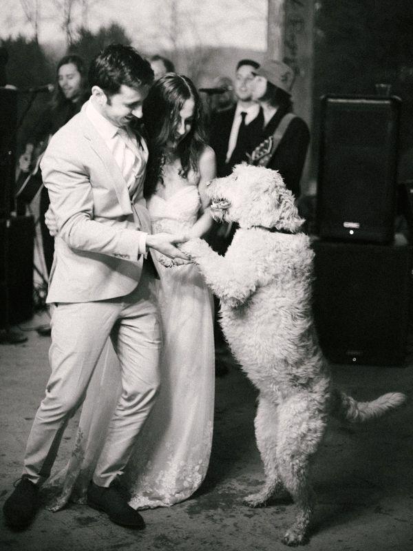 doggy dance partner