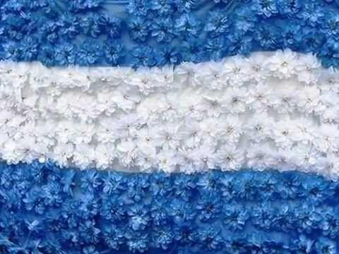 ▶ Quiero ver florecer a mi Bandera!! Argentina - YouTube