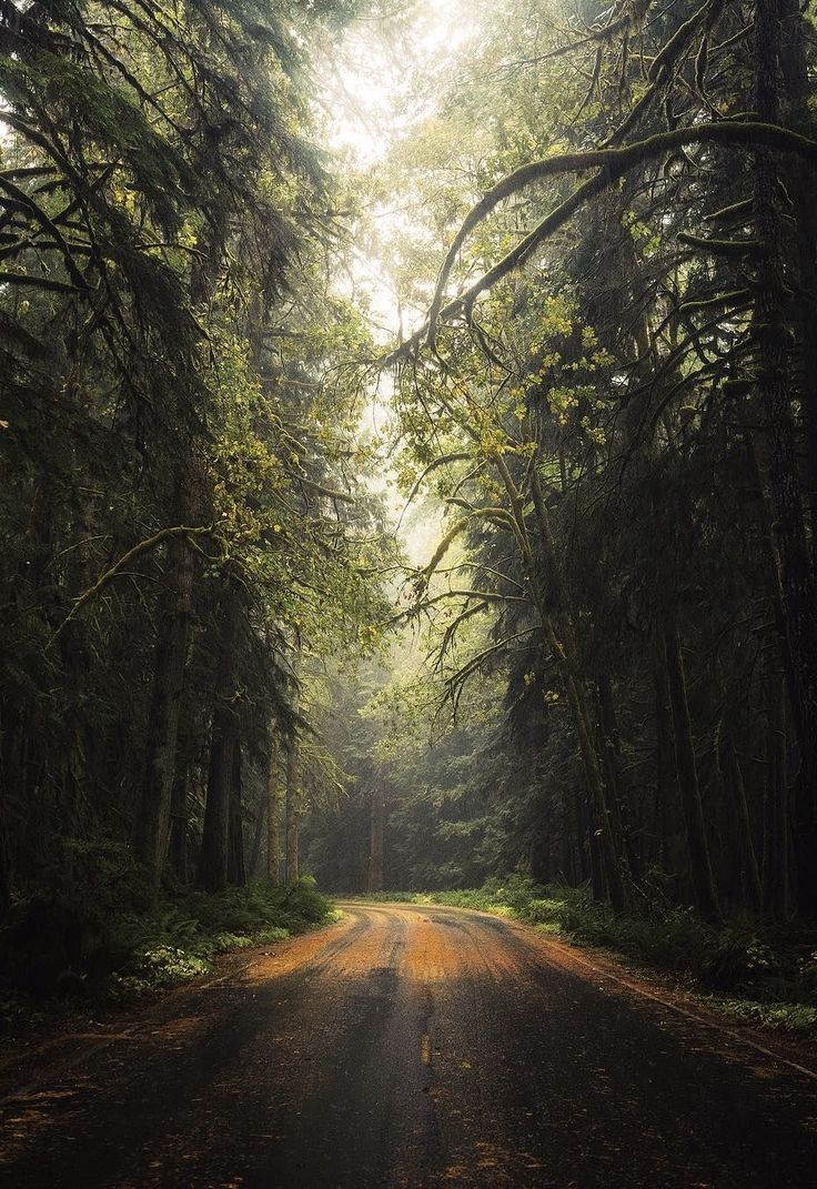 Forest road (Olympic National Park, Washington) by Michael Matti (@michaelmatti) on Instagram