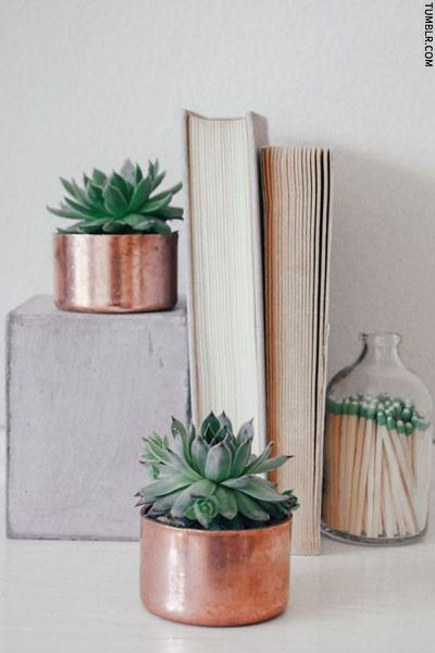 Succulents in little copper pots (handleless pans?)