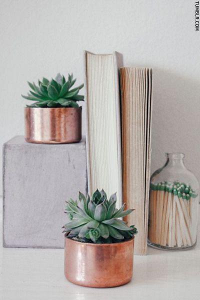 Succulents in little copper pots (handleless pans?)