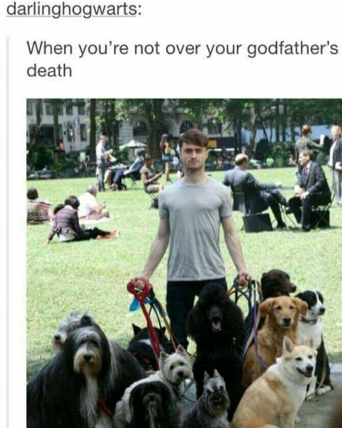 Are... they his or did he become a spontaneous dog walker?