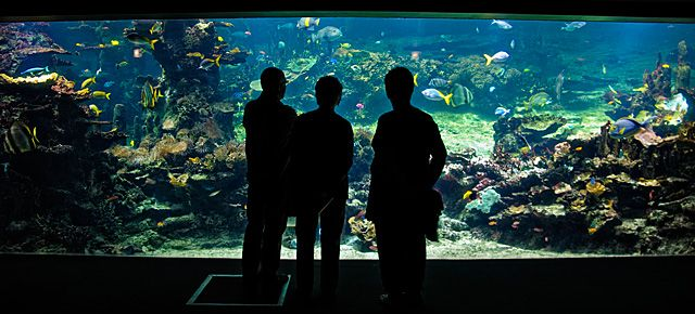 Visiting the NAUSICAA Aquarium in Boulogne Sur Mer, France http://cheeseweb.eu/2013/06/visiting-nausicaa-aquarium-boulognesurmer-france/