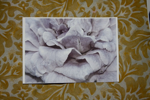 Simple flower petals postcard by amberroyaltyboutique on Etsy, $2.50