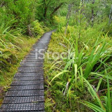 Boardwalk, Nelson Lakes National Park, NZ Royalty Free Stock Photo