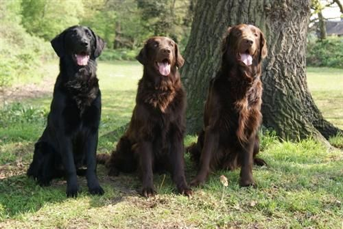 Dog Name: L-R Chance, Niko and Daddy Ace   Favourite Fish4Dogs Product: Salmon Working Dog Food  My Dog loves Fish4Dogs because... :  Father and sons all fed on F4D and never looked better.