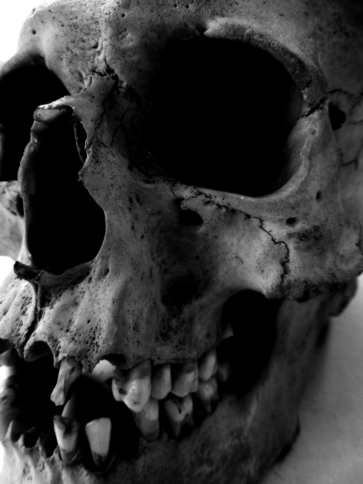 My art teacher keeps a skull in her classroom so I had a little photo shoot with it. (Skull 4)