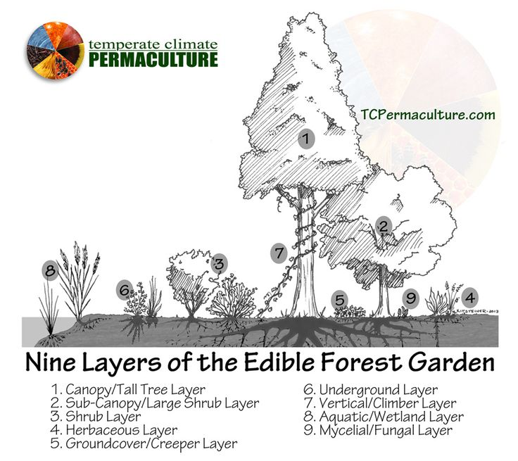Nine Layers of the Edible Forest Garden (Food Forest) byTemperate Climate Permaculture