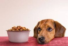 Treats made from dog food, safe for dogs on a prescription diet after bladder stones!
