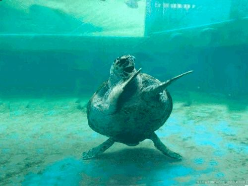 """makes me so happy lol """"Happy World Turtle Day, everyone!!"""" 