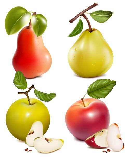 Different Fruit and green leaves vector 04