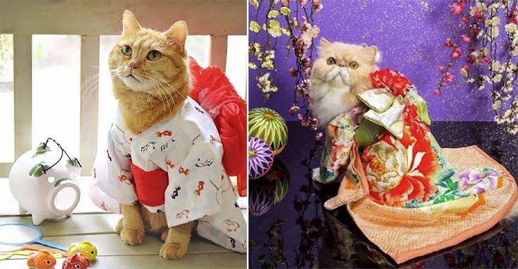 Katzen in Kimonos begeistern das Internet! #News #Unterhaltung