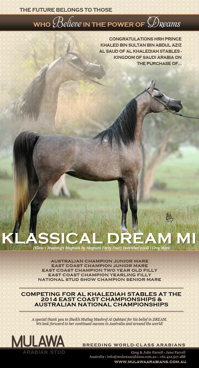 A DREAM Come True | Congratulations Al Khalediah Stables & HRH Prince Khaled bin Sultan bin Abdulaziz Al Saud :: Arabian Horses, Stallions, Farms, Arabians, for sale - Arabian Horse Network, www.arabhorse.com