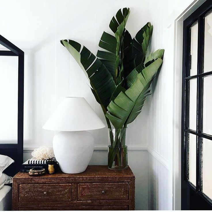 when you find an Instagram account that so perfectly encompasses your love for tropical greens... !! @harolds_finishing_touches #ckstyleaccordingly