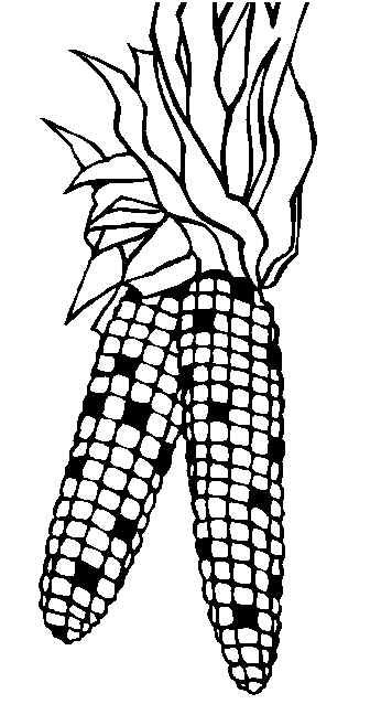 Indian Corn Coloring Page | coloring page