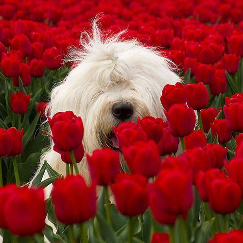 Poppy smell