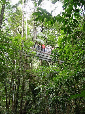 Daintree rainforest treetop walk