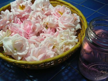 The Essence of a Rose: How to Make Rose Water - EcoSalon | Conscious Culture and Fashion