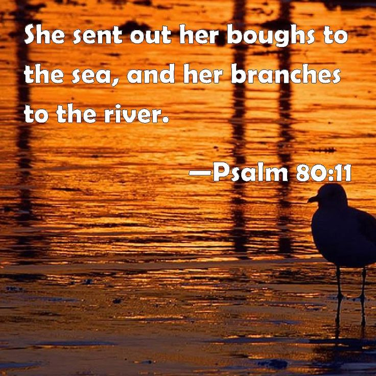Psalm 80 and 11