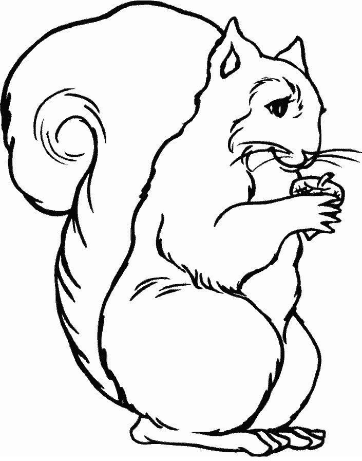 Veverita Planse De Colorat Si Educative Veverițe Desene