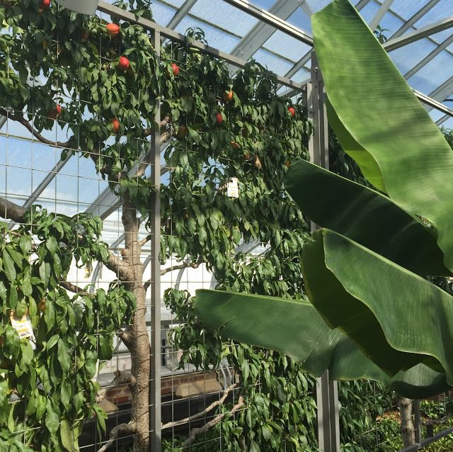 Countryliv: Flere ferieminder - et stort orangeri i Longwood Gardens